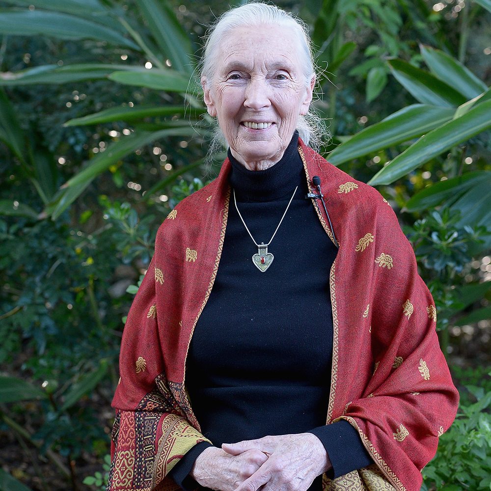 Jane Goodall Re... Jane Goodall Death